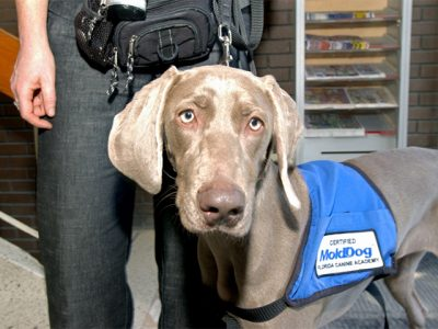 mold detection dog